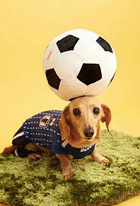 プロカメラマンが撮った可愛い犬  ハートいいねを押してね!の画像(可愛いに関連した画像)