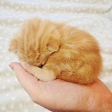 かわいい猫の赤ちゃん  ハートのいいねを押してね!の画像(#赤ちゃんに関連した画像)
