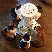 ストーブにあたる猫 画像右下のハートを押してねの画像(あたるに関連した画像)