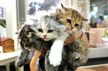 かわいい猫ちゃん スカパーより 写真右下のハートを押してねの画像(スカパー!に関連した画像)