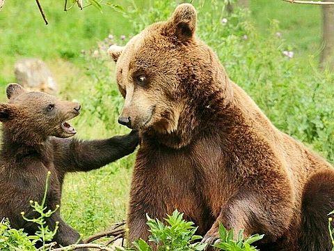 かわいい動物の親子 写真右下のハートを押してね