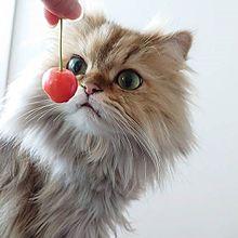 かわいい猫の画像347点 完全無料画像検索のプリ画像 Bygmo