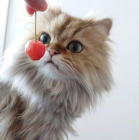かわいい猫ちゃん  写真右下のハートを押してね