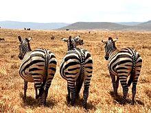 アフリカの動物たち  写真右下のハートを押してねの画像(動物に関連した画像)