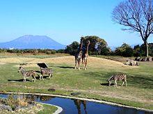 平川動物公園  写真右下のハートを押してねの画像(動物に関連した画像)