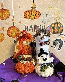 かわいい子猫ちゃん  写真右下のハートを押してねの画像(猫 かわいいに関連した画像)