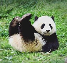 かわいいパンダちゃん  写真右下のハートを押してね