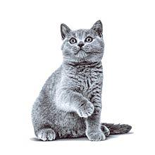 かわいい猫ちゃん  写真右下のハートを押してねの画像(猫 かわいいに関連した画像)