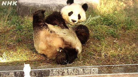 パンダと飼育員  写真右下のハートを押してねの画像(プリ画像)
