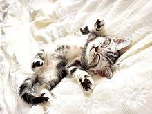かわいい子猫ちゃん  写真右下のハートを押してね プリ画像