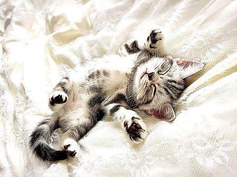 かわいい子猫ちゃん  写真右下のハートを押してねの画像(プリ画像)