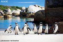 ペンギン  写真右下のハートを押してね プリ画像