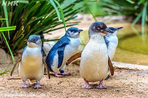 ペンギン  写真右下のハートを押してねの画像(プリ画像)