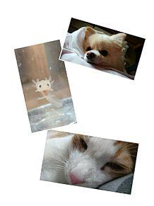 動物の画像(動物に関連した画像)