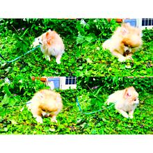 my pet ①の画像(PETに関連した画像)