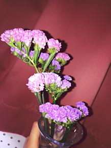 Flower🌼の画像(Flowerに関連した画像)