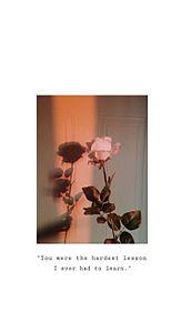 Rose .の画像(シンプルに関連した画像)