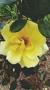 花壇の花の画像(花壇に関連した画像)