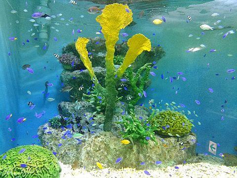小樽水族館の画像 プリ画像