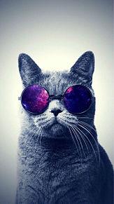 猫の画像(猫 おしゃれに関連した画像)