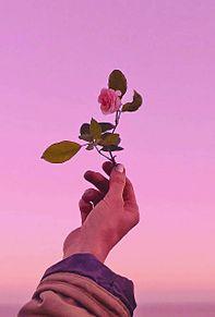 薔薇の画像(原画/素材に関連した画像)
