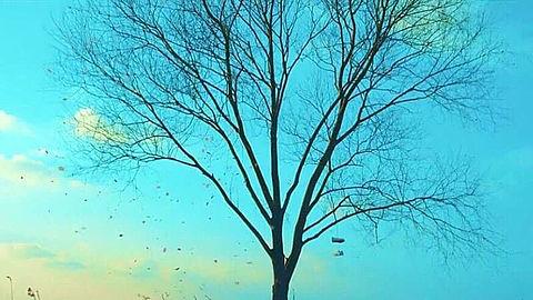 Spring dayの画像(プリ画像)