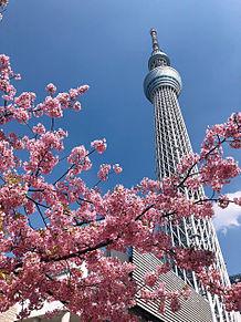 春のスカイツリーの画像(東京スカイツリーに関連した画像)