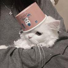 .の画像(猫 量産型に関連した画像)
