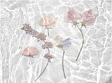 詳細の画像(#ピンク/水色に関連した画像)