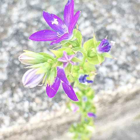 むらさきの花.🌷.*の画像(プリ画像)