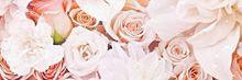 薔薇の画像(美しいに関連した画像)