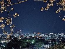 夜桜 プリ画像