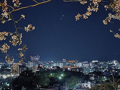 夜桜の画像(プリ画像)
