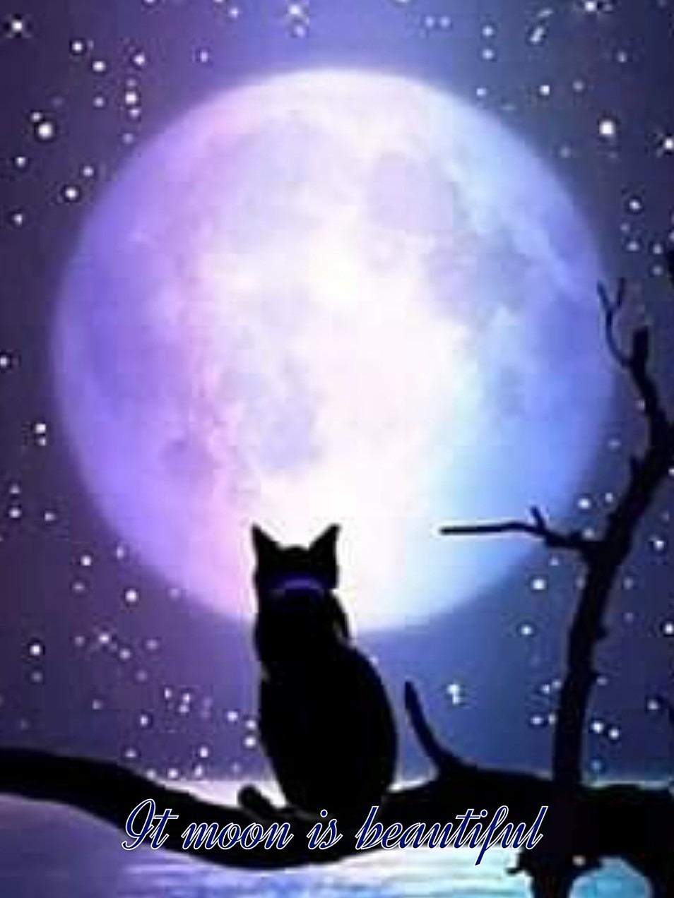 月がきれいの画像 p1_29