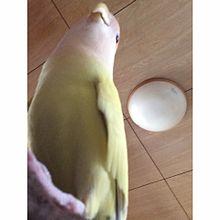 巨鳥がでたー!!!の画像(プリ画像)