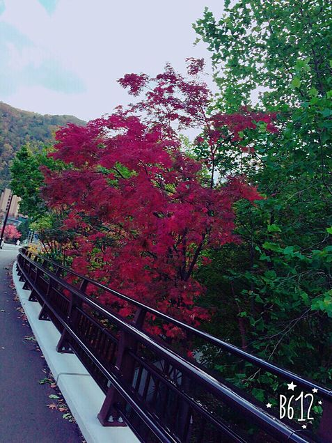 秋ッッ!の画像(プリ画像)