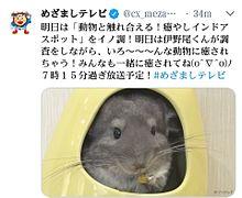 2018年8月16日放送のテレビ情報の画像(Hey! Say! JUMP 情報に関連した画像)