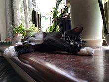 黒猫植物図鑑の画像(プリ画像)