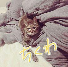 ちくわちゃん♡の画像(#フォーリミに関連した画像)