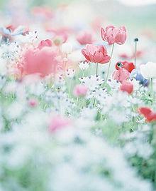 花の画像(おしゃれ/シンプルに関連した画像)