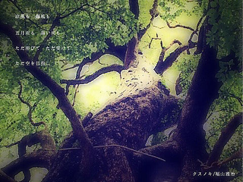 クスノキ/福山雅治  8.09の画像(プリ画像)