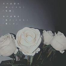 かわよきの画像(かわいい 素材 花に関連した画像)