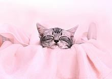 癒しネコ。 プリ画像