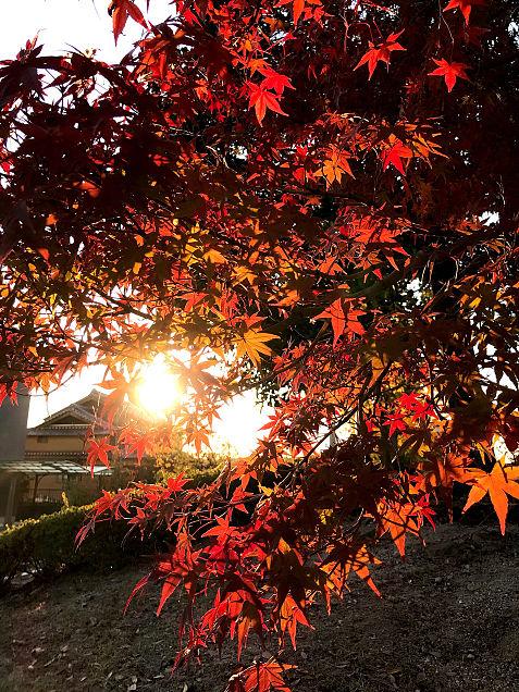 夕日と紅葉🍁の画像(プリ画像)