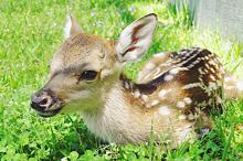 鹿の画像(#エモいに関連した画像)