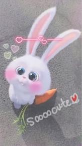 うさぎ スノーボール ペット 可愛いの画像26点 完全無料画像検索の