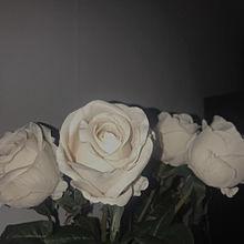 notitleの画像(薔薇に関連した画像)