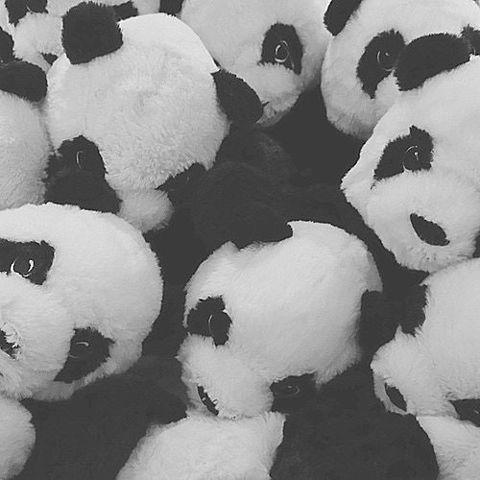 パンダの画像 プリ画像