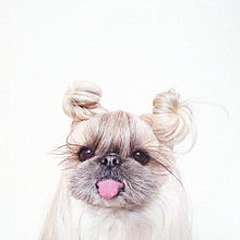 犬の画像(プリ画像)