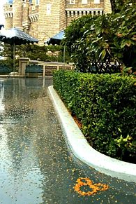 雨のディズニーリゾート  写真右下のハートを押してねの画像(ディズニーリゾートに関連した画像)